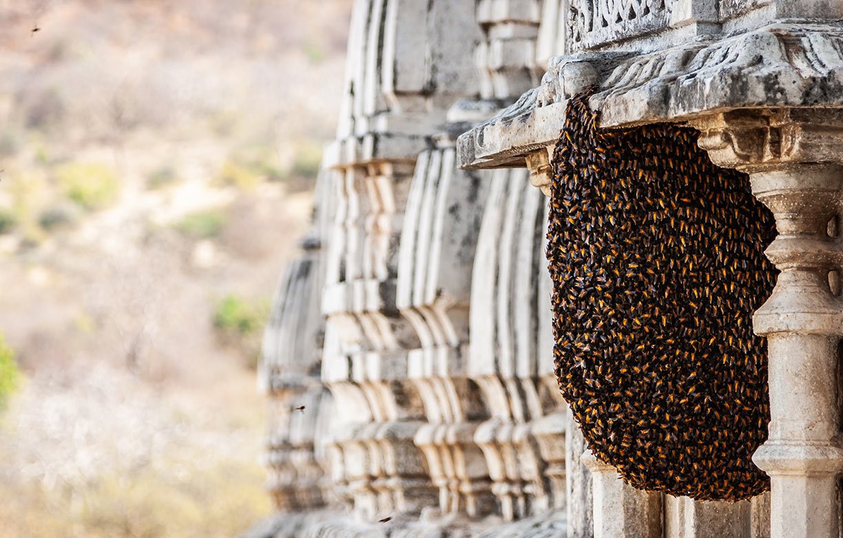 First sight of Beehive
