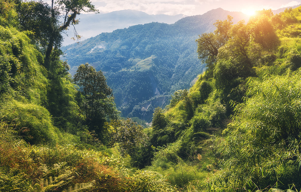 Himalayan Wild Forest
