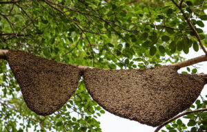 Wild Bee Hives all over