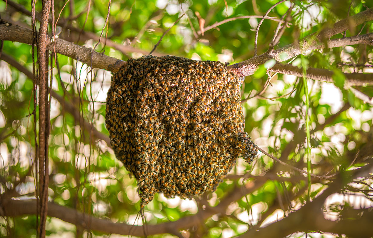 Sacred Queen Bees